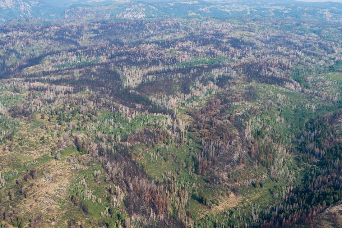 Fire Damage Glenwood Canyon