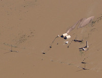Colorado - South Platte River - Flood - Oil Gas Spill