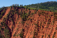 Forest growth 10 years after Coal Seam Fire, Glenwood Springs, CO